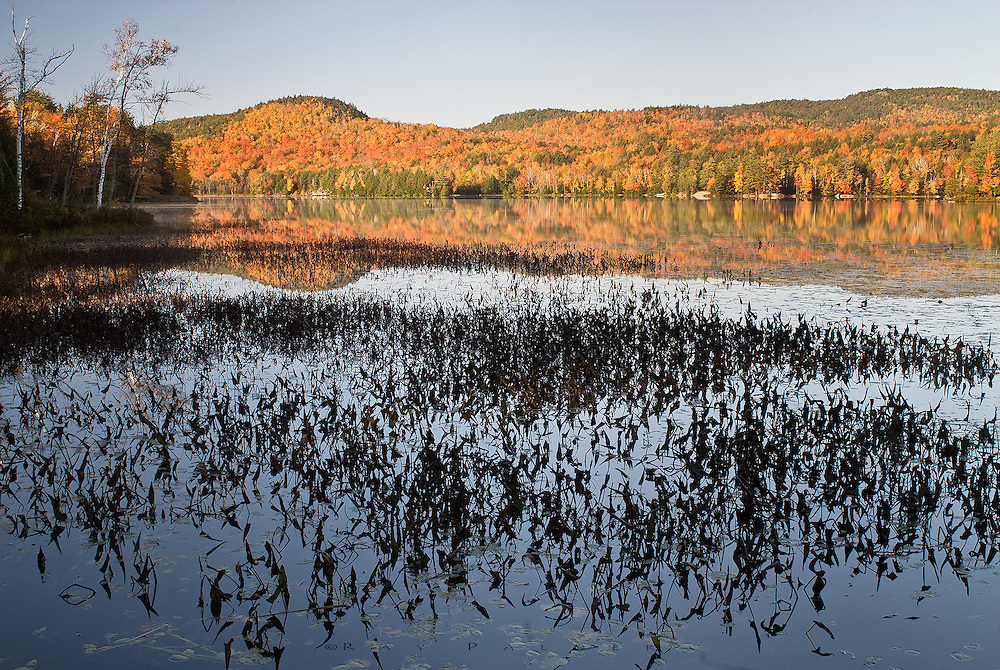 Adirondacks, NY<br /> RP503208.<br /> It was just after sunrise on the east shore of Putnam Pond, and full light had not penetrated the forest behind me as of yet.  Pickerelweed and lake grasses were silouhetted against the unruffled water, reflecting a baby blue sky and autumn foliage in full swing. Putnam is one of the larger bodies of water in the Pharoah Lake section.