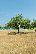 Camping Areti, Greece 2011