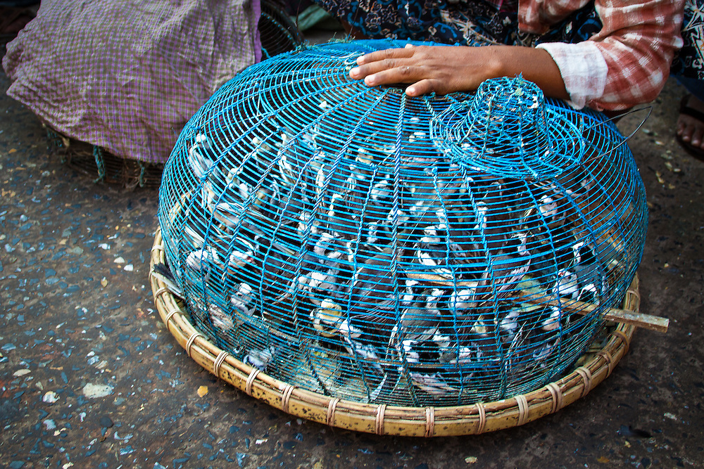 Captured birds are for sale in the jade market in Mandalay. One earns merit for purchasing a bird and setting it free.