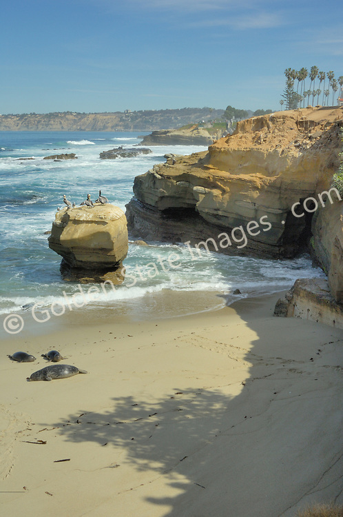 The view north from the Childrens Pool in La Jolla, California.  <br /> <br /> Harbor Seals are frequent visitors to this protected beach.