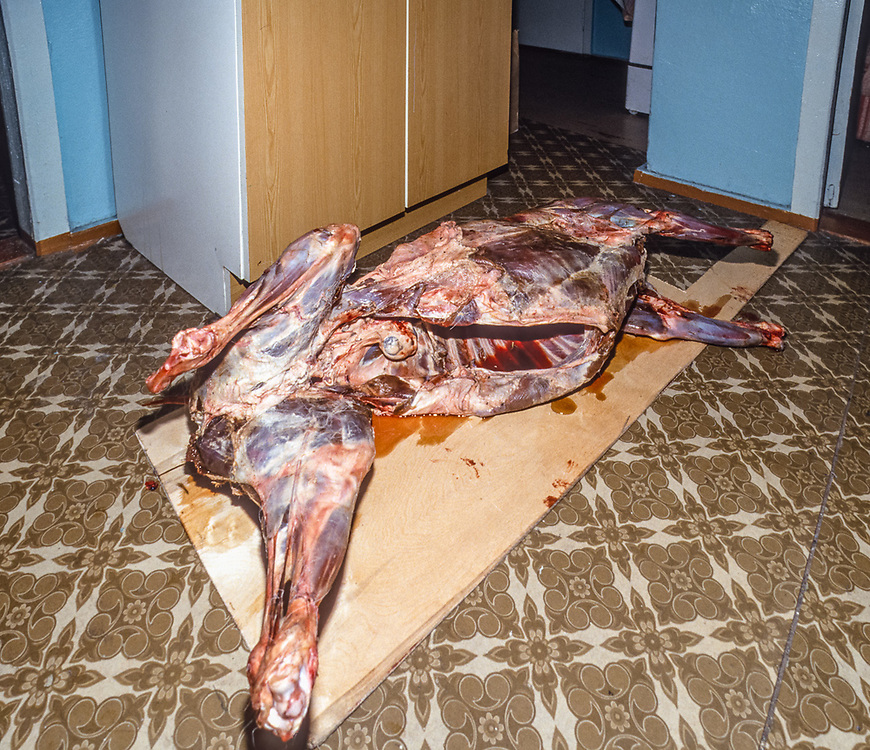 Reindeer carcass, Unga Tepekak's home, ready for butchering by her son, Village of Sireniki, Chukotsk Peninsula, Northeast Russia