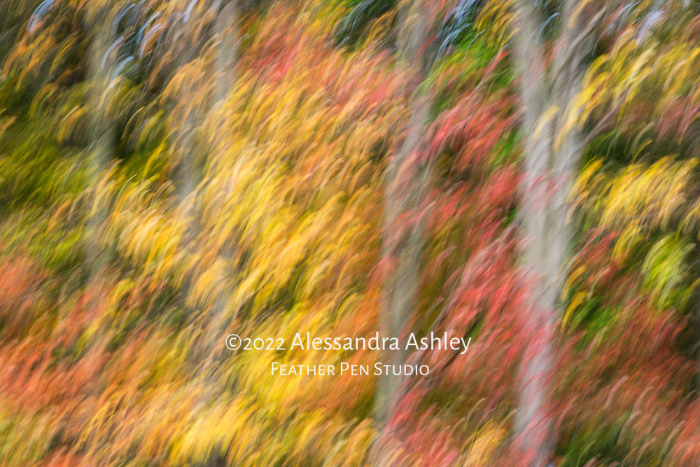 Mixed autumn foliage in wooded setting, captured with in-camera impressionistic blur effect.