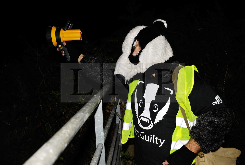 © Licensed to London News Pictures. 06/10/2013.  Carhampton, Somerset, UK.  Members of the Somerset badger patrol at Carhampton, on the final patrol as the cull comes to an end in Somerset. Campaigners against the cull went on patrol looking for dead or wounded badgers on public footpaths and roads.  The Government has licensed a pilot badger cull in parts of Somerset and Gloucestershire as part of efforts to reduce bovine tuberculosis in cows on farms.  06 October 2013.<br /> Photo credit : Simon Chapman/LNP