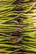 Scotts asparagus farm, Marlborough, South Island, New Zealand