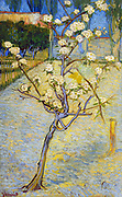 Painting of Small Pear Tree in Blossom, 1888. By Vincent van Gogh. Oil on Canvas.