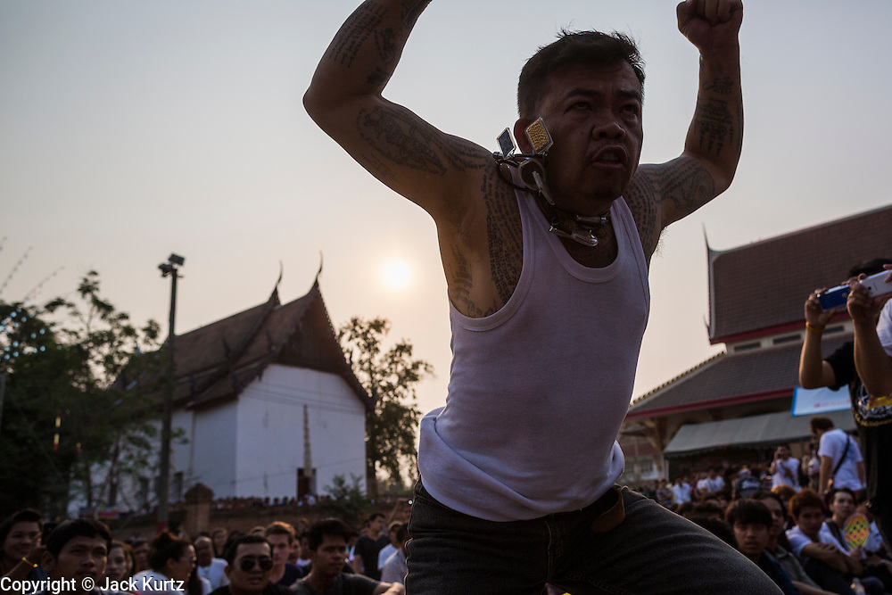 """15 MARCH 2014 - NAKHON CHAI SI, NAKHON PATHOM, THAILAND:  A man channels a tiger, his spirit animal, at the Wat Bang Phra tattoo festival. Wat Bang Phra is the best known """"Sak Yant"""" tattoo temple in Thailand. It's located in Nakhon Pathom province, about 40 miles from Bangkok. The tattoos are given with hollow stainless steel needles and are thought to possess magical powers of protection. The tattoos, which are given by Buddhist monks, are popular with soldiers, policeman and gangsters, people who generally live in harm's way. The tattoo must be activated to remain powerful and the annual Wai Khru Ceremony (tattoo festival) at the temple draws thousands of devotees who come to the temple to activate or renew the tattoos. People go into trance like states and then assume the personality of their tattoo, so people with tiger tattoos assume the personality of a tiger, people with monkey tattoos take on the personality of a monkey and so on. In recent years the tattoo festival has become popular with tourists who make the trip to Nakorn Pathom province to see a side of """"exotic"""" Thailand.  PHOTO BY JACK KURTZ"""