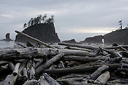 Driftwood lines the beach in front of rock outcroppings at Second Beach in La Push, Washington.