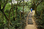 There are nice hiking trails everywhere in Taiwan.  This one is in Xindian, Taiwan.