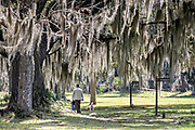 A man walks his dog along the ancient Live Oak trees covered in Spanish moss at the Fort Frederica National Monument, the original colonial settlement in St. Simons Island, Georgia. Fort Frederica was established by Georgia founder James Oglethorpe in 1736 to serve as a bulwark against the Spanish settlements in Florida,