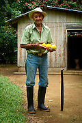 82 year old Costa Rican farmer holds yellow fruit next to his trusty machete.