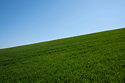 Crest of a hill covered in green crops against a pure blue sky on 4th April 2021 in Studley, United Kingdom. (photo by Mike Kemp/In Pictures via Getty Images)