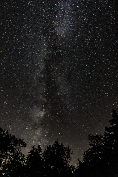 The Milky Way seen from above the trees within the woods of the White Mountains.