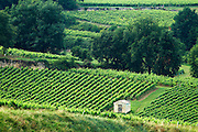 vineyard hut chateau gudeau saint emilion bordeaux france