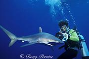photographer and silky shark, Carcharhinus falciformis, Tongue of the Ocean, off New Providence, Bahamas ( Atlantic Ocean )