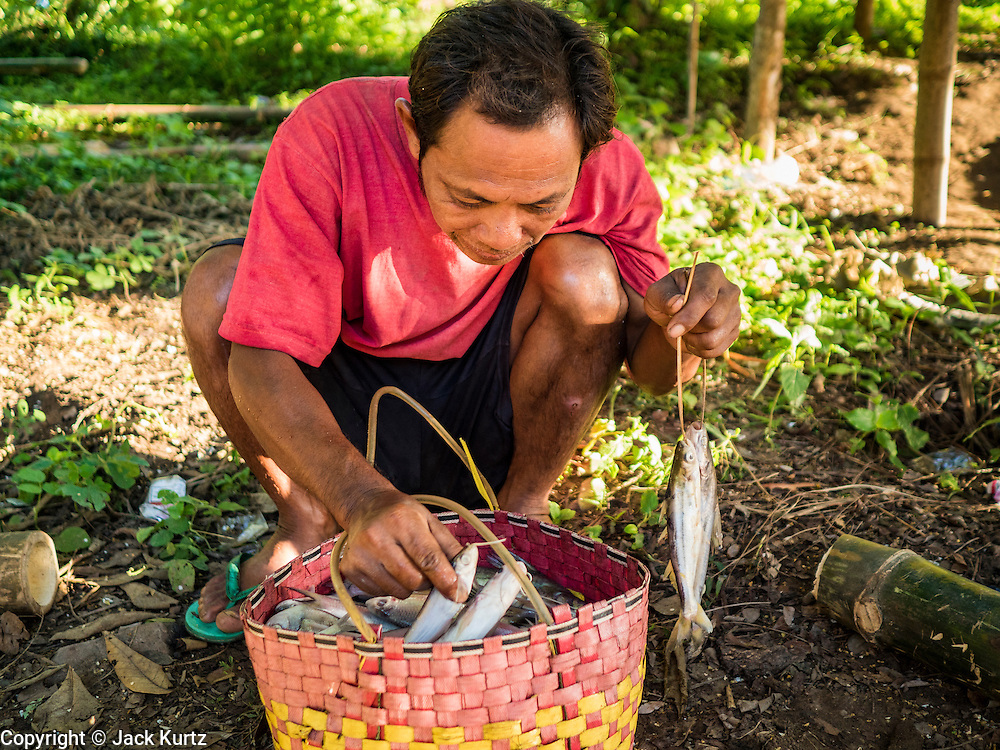 19 JUNE 2016 - DON KHONE, CHAMPASAK, LAOS:  A fisherman checks his day's catch at Khon Pa Soi Waterfalls, on the east side of Don Khon. It's the smaller of the two waterfalls in Don Khon. Fishermen have constructed an elaborate system of rope bridges over the falls they use to get to the fish traps they set. Fishermen in the area are contending with lower yields and smaller fish, threatening their way of life. The Mekong River is one of the most biodiverse and productive rivers on Earth. It is a global hotspot for freshwater fishes: over 1,000 species have been recorded there, second only to the Amazon. The Mekong River is also the most productive inland fishery in the world. The total harvest of fish from the Mekong is approximately 2.5 million metric tons per year. By some estimates the harvest in the Tonle Sap (in Cambodia) had doubled from 1940 to 1995, but the number of people fishing the in the lake has quadrupled, so the harvest per person is cut in half. There is evidence of over fishing in the Mekong - populations of large fish have shrunk and fishermen are bringing in smaller and smaller fish.    PHOTO BY JACK KURTZ