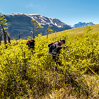 2016 Tracking Fire, Wolves, and Elk in Canadian Rockies