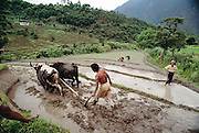 Plowing a rice paddy in the terraced paddies in the Punakha Valley, Bhutan From Peter Menzel's Material World Project.