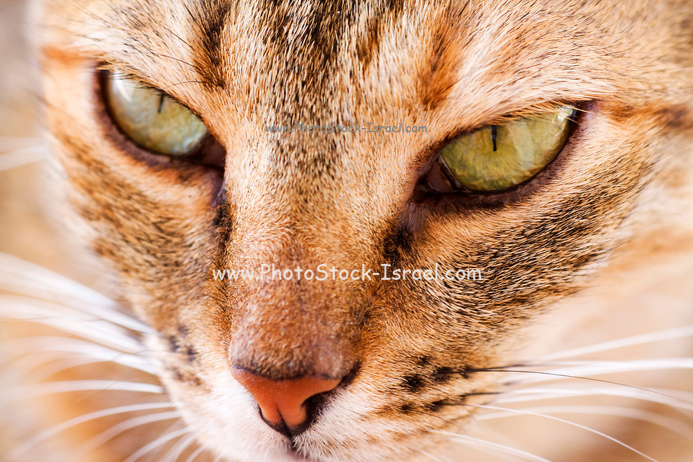 Close up of the face of a ginger cat