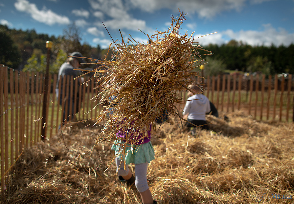 Children hunt for candy hidden in straw.<br /> <br /> For 46 years on the fourth Saturday of October, the Blue Ridge Folklife Festival has brought together a host of musicians, moonshiners, craftspeople, cooks, motorheads, mule jumpers, horse pullers, coon dog racers, antique tractor buffs, and old-time gamers for a celebration of the rich heritage and traditions of the region. The festival participants are the real thing, sharing folk traditions that have been a part of their families and/or communities for years. The Blue Ridge Folklife Festiva, held on the campus of Ferrum College, is the largest regional event of its kind in Virginia, featuring performers, artisans, foods, and activities not found at typical craft shows, fairs, and festivals. <br /> <br /> Photographed, Saturday, October 27, 2018, in Ferrum, Virginia. JERRY WOLFORD and SCOTT MUTHERSBAUGH / Perfecta Visuals