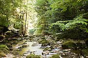 A river in the forest near Col de la Faucille, Jura region, France