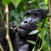 Fotoreise Uganda