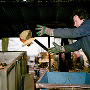 Throwing logs into the back of a trailer at Scackleton Sawmill, North Yorkshire, UK. Scackleton village is in the Howardian Hills AONB, a landscape with well-wooded rolling countryside, patchwork of arable and pasture fields, scenic villages and historic country houses with classic parkland landscapes.