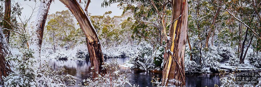 Beautiful eucalypts beside the Narcissus River in winter. Central PLateau, Tasmania.<br /> <br /> Limited Edition Print; Edition of 125<br /> <br /> 'Image Size' below refers to the size of the thumbnail. This is a high resolution large format print.