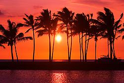 Silhouette of Coconut Palms, Cocos nucifera, Anaehoomalu or `Anaeho`omalu Beach at sunset, Waikoloa, Big Island, Hawaii, Pacific Ocean