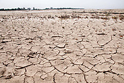 Bihar India March 2011. The Diara, sandbank islands in the Ganges. Dried up river.