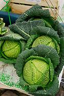 Savoy Cabbage  market France