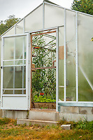 A small home greenhouse is used to grow organic tomatos and herbs.