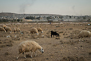 The Syrian border town of Kobane/Ayn al-Arab (background right) seen from the Turkish side of the border near Suruç.