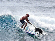 Meet Kama the surfing pig! He even has sponsorship deals, an Instagram account and can handle serious wipe-outs<br /> <br /> This little piggy will never find himself inside a Hawaiian imu.<br /> Kamapua'a, or Kama for short, is a surfing pig professional who can balance on a board and ride out wipe-outs with class, to the wonder of beach-goers. <br /> He's so good that Costco gives him free surfboards and his devoted owner, Kai Holt, has promised never to cook him in an imu, a Hawaiian underground oven.<br /> <br /> <br /> 'I think he enjoys it, you know. He really gets off on it. It seems like he has a good time out there,'<br /> <br /> 'You know surfing is Hawaii's gift to the world. It's like true happiness, you know, that's what this guy does. Everywhere he goes he just makes people smile and laugh. He just brings joy to the world.'<br /> Little Kama's surfing adventures began a few months ago when he stumbled into the Holt family's cabana at Bellows Beach.<br /> <br /> They took the abandoned piggy home and discovered he could swim when he fell into the backyard swimming pool. <br /> 'I had no idea pigs could swim,' Holt said.<br /> It wasn't long before Holt and his son Braiden took Kama to Sandy Beach and the four-legged waterbaby was jumping onto Holt's standup paddle board.<br /> 'It's funny when there's a big wave and a bump coming and he launches into the air,' Braiden said.<br /> 'I think he's gonna drown, but he just pops right up out of the foam.'<br /> <br /> Holt and Kama's bond is so close, they go everywhere together and even sleep in the same bed. <br /> 'As long as he lives, he's not gonna see a dinner plate, that's for sure,' Holt said. 'He wont see the inside of an imu.'<br /> The black pig has become such a pro, he is sponsored. <br /> He gets free boards from Costco, clothes from Local Motion and received a Go Pro camera from the Bike Factory.<br /> He even has his own Instagram account, kamapighi, where he keeps his more than 940 followers up-to-date on his adventures.<br /> ©Exclusivepix