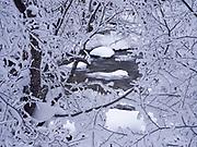 Hoarfrost on mountain alder, Alnus incana, growing along the Big Wood River near Goat Creek, Sawtooth National Recreation Area, Sawtooth National Forest, Idaho.