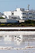 Birds resting in Las Salinas, the salt pool in Formentera