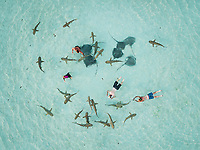 Aerial view of people swimming with sharks and sting rays in Moorea Island in French Polynesia.
