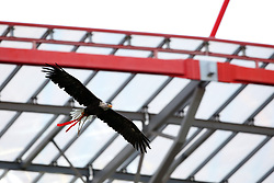 September 12, 2017 - Lisbon, Portugal - Benfica's eagle fly in the stadium before the UEFA Champions League football match SL Benfica vs CSKA Moscow at the Luz stadium in Lisbon, Portugal on September 12, 2017. Photo: Pedro Fiuza (Credit Image: © Pedro Fiuza via ZUMA Wire)
