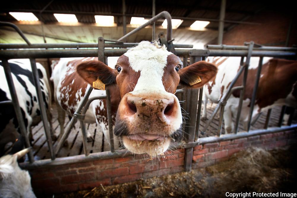 380927-panoreportage over landbouw-Boerderij met melkkoeien-boer Guy Van Loock-Yzerweg 13 Booischot-foto's Joren De Weerdt