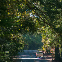 Vehicles drive below towering trees on Skyline Boulevard, atop the Santa Cruz Mountains in the Bay Area of California.
