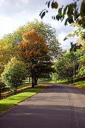 The leaves on the trees in Kelvin Grove Park Glasgow turn from green to  autumnal red and gold in October 2010 .Images © Paul David Drabble