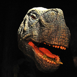 © licensed to London News Pictures. LONDON UK. 20/04/11. An animatronic Camarasaurus peers through the undergrowth in one of the new exhibits. Dinosaurs make a return to the London's Natural History Museum in this summer's family blockbuster exhibition, Age of the Dinosaur. .See special instructions for usage rates. Photo credit should read Stephen Simpson/LNP