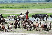 Africa, Tanzania, Lake Eyasi National Park a herd of livestock and shepherd
