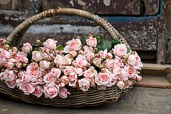 Basket of cut roses
