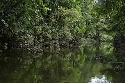 Black water stream off of Tiputini River<br /> Yasuni National Park, Amazon Rainforest<br /> ECUADOR. South America