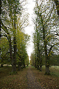 Tree lined path in the grounds of Lyme Park National Trust property in Cheshire, England, United Kingdom. (photo by Andrew Aitchison / In pictures via Getty Images)