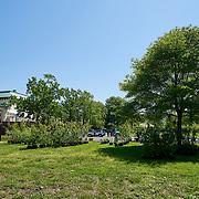 20210515 Tree Philly jpg2