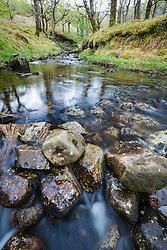 Streem through Sheeffrey Wood, County Mayo, Ireland