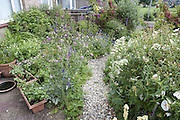 Wildlife Garden, Kent, UK, planted with flowers and shrubs to attract various birds, insects and other wildlife