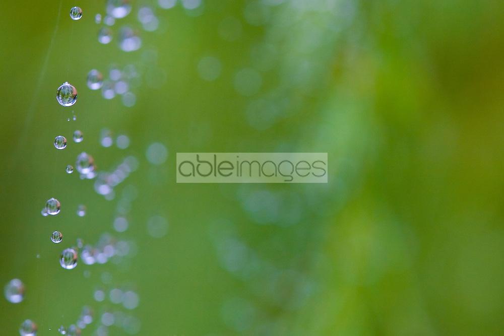 Close up of rain drops over cobwebs