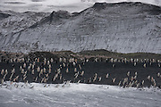 Surf crashing on the black sand beach on Half Moon Island, home to over 3000 pairs of chinstrap penguins, many with chicks at this time of year, late in the Antarctic summer.